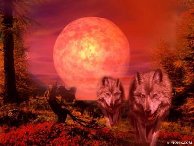 un coucher de soleil avec des loups po me des fond d 39 cran carte virtuelle des. Black Bedroom Furniture Sets. Home Design Ideas
