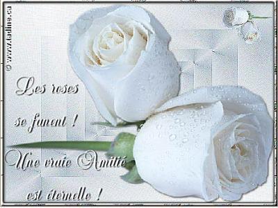 Langage des fleurs po me des fond d 39 cran carte - Langage des fleurs amitie ...