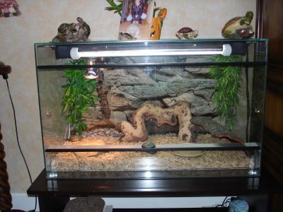 Le terrarium mon petit monde de tortue - Petit terrarium ...