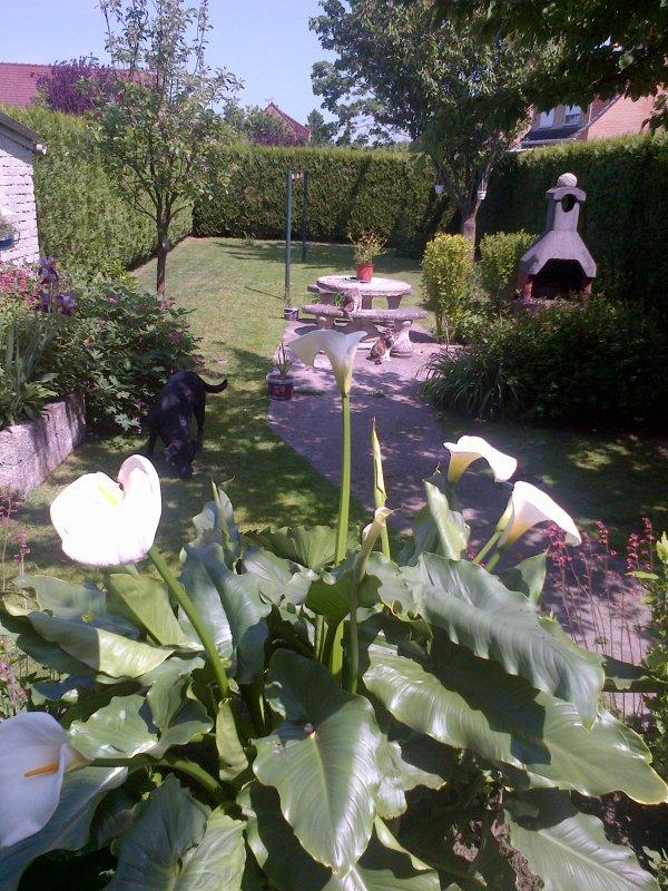 Mon jardin 24 mai 2015 essentiellement italien eros et for Jardin mai 2015