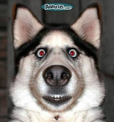 Le chien  Races de chiens, éducation, comportement