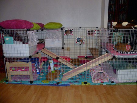 le cavy cage qu 39 est ce que c 39 est blog de lachoupinettedu62. Black Bedroom Furniture Sets. Home Design Ideas
