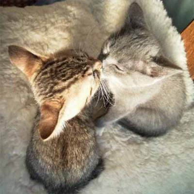 pour vous, c'est quoi, bien embrasser ?  2903238531_small_1