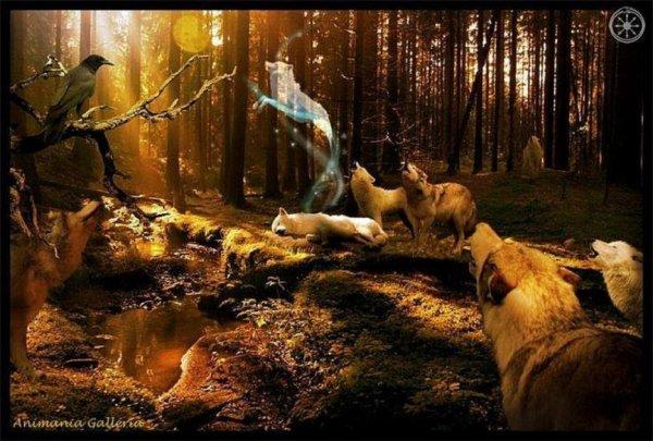 protegeons la nature et c animaux