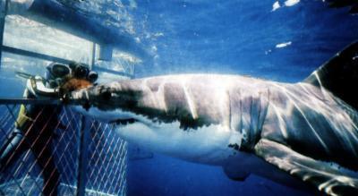 rencontre requin