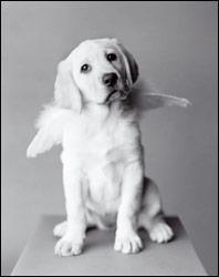 dogs-paradis