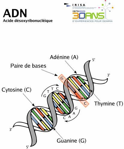 bio-genome