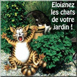 R pulsif pour les chats naturel pensez aux plantes blog de leonor974 - Repulsif naturel pour chat interieur ...