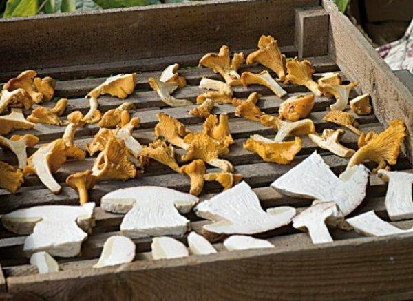 M�thodes de conservation des champignons
