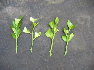 Quelque bouture blog de jardin expo for Comment arroser un rosier en pot