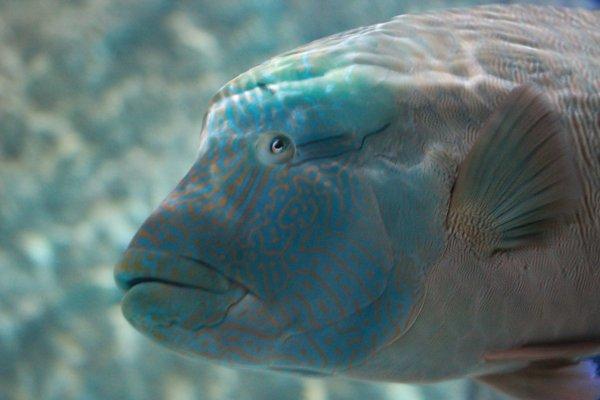 sortie aquarium du 27/04/2014