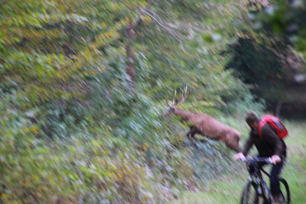 chasse du 15/10/2014 retraite manqu�e
