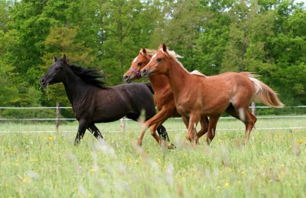 Image grand galop cheval - Grand galop le cheval volant ...