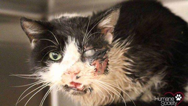 Un chat sort de sa tombe, 5 jours apr�s sa � mort �