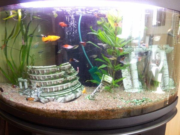 mes poissons exotique meii animaux toutes maah viie. Black Bedroom Furniture Sets. Home Design Ideas