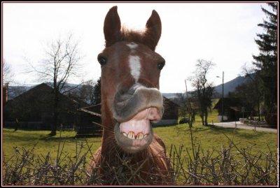 Blog de le plus drole cheval blog de le plus drole - Cheval rigolo ...
