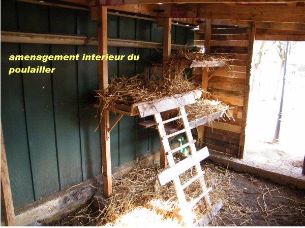 Un nouveau poulailler pour 2011 blog de naturejardin08 for Interieur poulailler