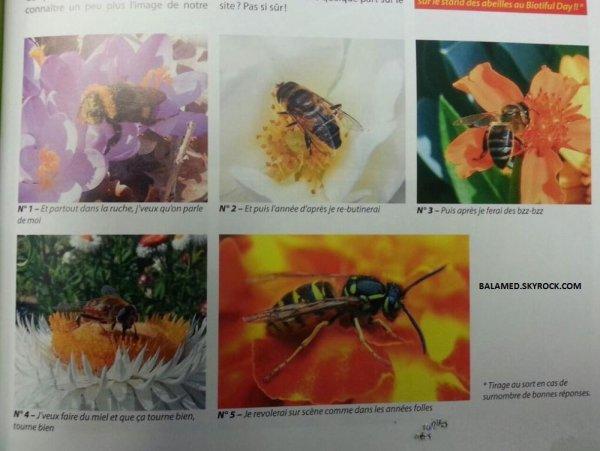D�tourn�e les textes d'un titre sur la r�ussite d'une abeille