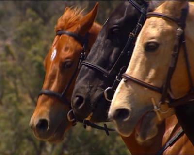 Le grand galop blog de chevaux beaut et youtube - Grand galop le cheval volant ...
