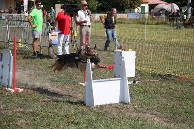 il est pas beau le loulou grand prix de france avignon flyball 2011