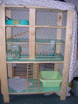 blog de delphineee la bande a dexter le rat. Black Bedroom Furniture Sets. Home Design Ideas