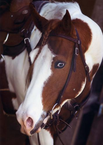 horse-genetique