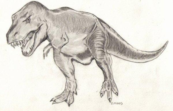 T rex ou tyrannosaurus rex du bout de mes doigts le monde de l 39 art n 39 est pas - Modele dessin dinosaure ...