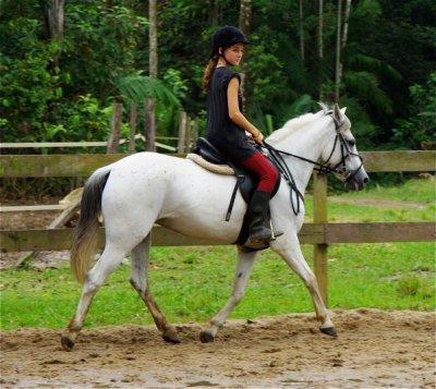 cheval qui essaye de mordre Le problème du cheval qui embarque vient à la fois d'un manque de technique du cavalier qui essaye le plus souvent d'arrêter le cheval sur deux rênes.