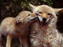Photo de Loves-Animal