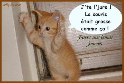 Le chat trop marrant le monde de m la - Chaton marrant ...