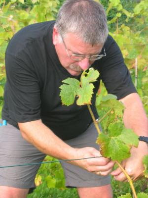 Evolution et entretien de la vigne le clos du bois des - Entretien de la vigne ...