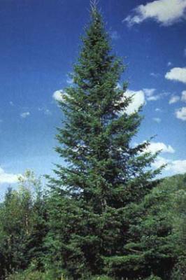 Les arbres de no l notre classe pour la fondation albert - Sapin artificiel haut de gamme ...