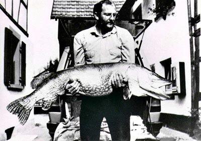 Brochet: Record 150cm pour 25kg Allemagne en 1986/Description/Rapidit�e/Taille