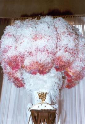 Le chapeux a plume d 39 autruche le skyblog officiel sur le carnaval de binche - Poids d une autruche ...