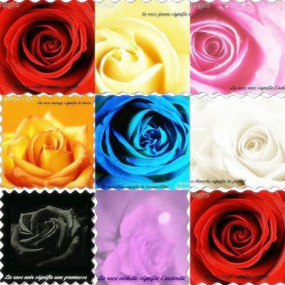Signification d 39 une rose histoire de passer le temps et ki c 39 est peux - Signification des roses rouges ...