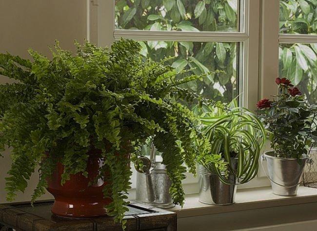 Plantes d 39 interieur j 39 ai appris que ce sont les petits v nements for Petites plantes vertes