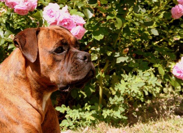 """""""Le chien � l'incroyable capacit� de deviner nos pens�es et nos sentiments"""""""