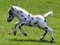 Photo de jeux--equin