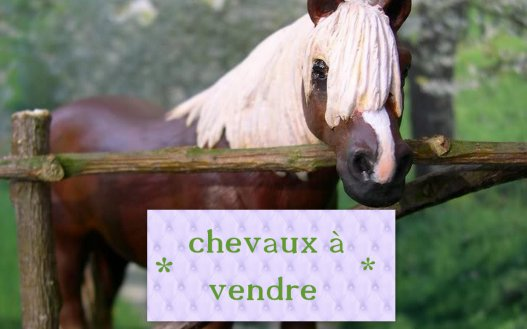 chevaux a vendre schleich cr a. Black Bedroom Furniture Sets. Home Design Ideas