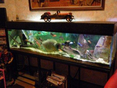 mon aquarium 500 litres 2 metres de de jacques lefebvre