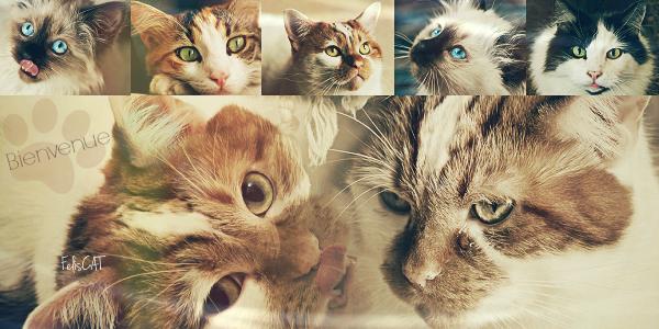 • • • Un amour de chat • • •