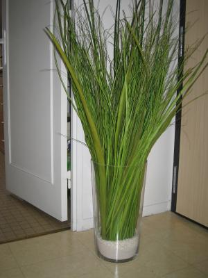 D co plante bienvenu chez bidounico et bidoudidine for Plante haute