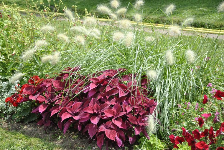 jardin des plantes parterre de fleurs photo sm99 blog mic mac numero 2. Black Bedroom Furniture Sets. Home Design Ideas