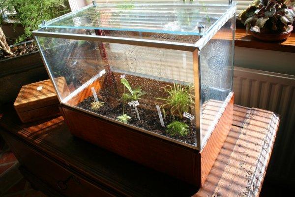blog de carnivores plante grasse toutes nos plantes. Black Bedroom Furniture Sets. Home Design Ideas