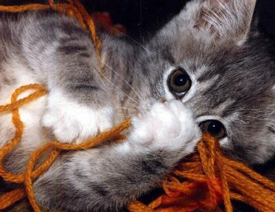 Au trop mimi chaton 02100 - Image de chaton trop mimi ...