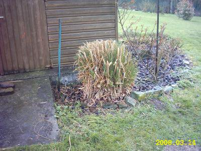 Taille de herbe de pampa blog de dutchnature - Herbe de pampa ...