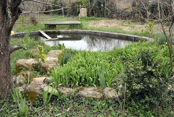 Ambiance jardin le point d 39 eau photo sm07 blog mic mac for Point d eau dans le jardin