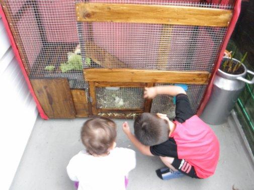 petite cage fabrication maison pour le lapin des enfants blog de aquarium49. Black Bedroom Furniture Sets. Home Design Ideas