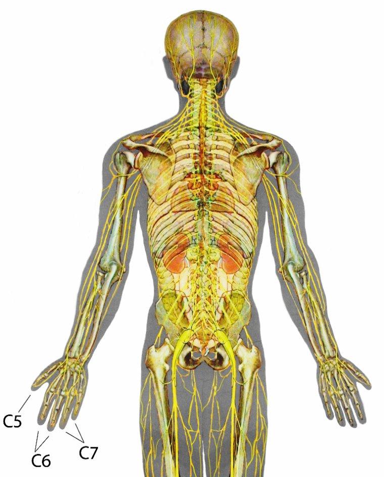 Les douleurs dans les muscles du dos après la grippe