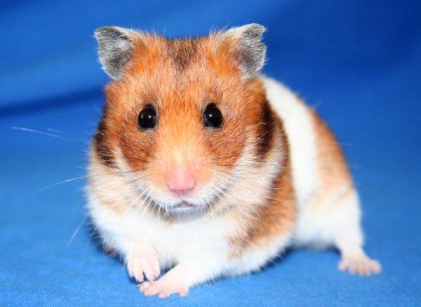 Xx Hamster.Com
